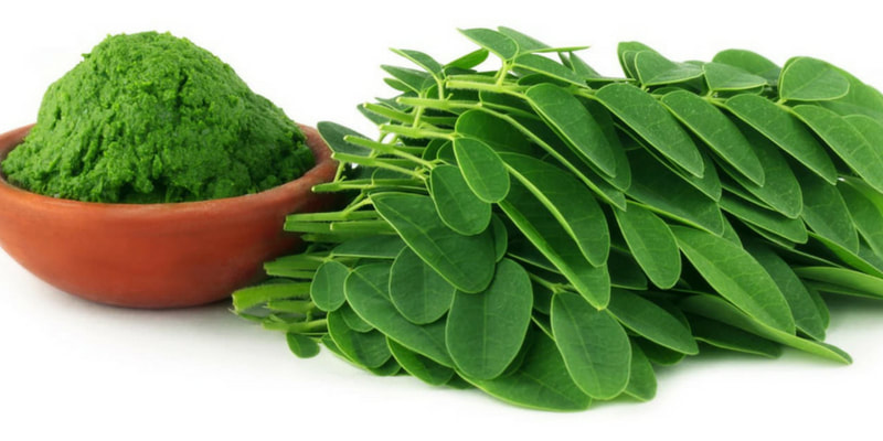 moringa herb for pregnancy and breastfeeding health RootMama